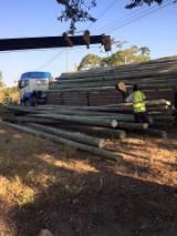 Hardwood Logs  - Fordaq Online market - Eucalyptus Electrical/ Fencing Poles