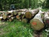 France - Furniture Online market - Offer for Oak Saw logs, 30 cm