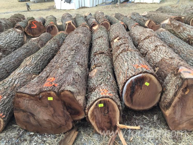 Black-Walnut-Saw-Logs