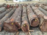 Black Walnut Saw Logs, 12