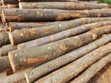 Brandhout - Resthout Brandhout Houtblokken Niet Gekloofd - Essen Wit, Beuken, Haagbeuk Brandhout/Houtblokken Niet Gekloofd 15;  33 cm