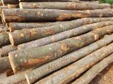 Brennholz, Pellets, Hackschnitzel, Restholz Gesuche - Hain- Und Weissbuche, Buche, Esche  Brennholz Ungespalten 15;  33 cm