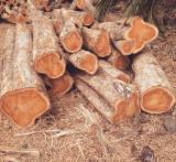 Wälder Und Rundholz Südamerika - Schnittholzstämme, Teak