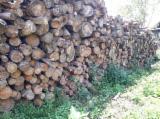 Meko Drvo  Trupci Za Prodaju - Ogrevno Drvo, Ariš , Jela -Bjelo Drvo, Bor  - Crveno Drvo