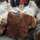 Walnut  Hardwood Logs - Offer for European Walnut Saw Logs
