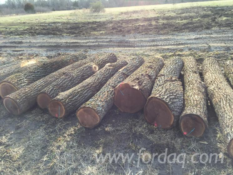 Offer for Black Walnut Saw Logs