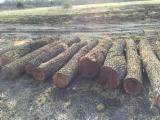 Schnittholzstämme, Walnuss