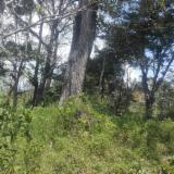 Trouvez tous les produits bois sur Fordaq - Maderas Tropicales - Vend Grumes De Sciage Cedro