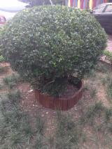 Vietnam Garden Products - Offer for Garden Circle wooden edging HMG233/4-2906