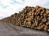 Cembran Pine, Siberian Yellow Pine -  Softwood Logs - Sell lumber, wood round timber wholesale.