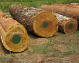 Japan Hardwood Logs - Iroko saw logs 60+ cm