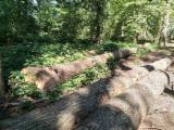 Hardwood  Logs Oak - Saw Logs, Oak
