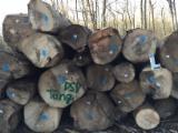 Ash  Hardwood Logs - Offer for White Ash Saw logs, 3 m long