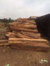Kopen Of Verkopen  Square Logs Loofhout - Square Logs, Vene, Kosso Wood