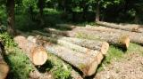 Forest And Logs Germany - German white oak abc logs 25-35cm