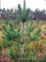 Forest & Harvesting Equipment - Spiral tree guards