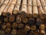 Softwood  Logs Pine Pinus Sylvestris - Scots Pine - Buying Pine Peeling Logs, 8-10 cm