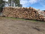 Hardwood Logs Suppliers and Buyers - Premium Birch Veneer Logs For Firewood, 12; 18 cm