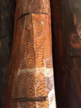 硬木原木待售 - 注册及联络公司 - 木皮单板原木, Palo Santo