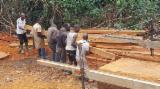 Sawn And Structural Timber Africa - Hardwood Squares from Douala, 50 mm