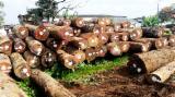 硬木:原木 轉讓 - 锯木, 腺状纽敦豆木