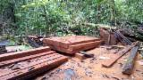 Indonesië levering - Gevierschaald Hout, Merbau