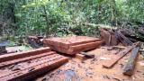 Offers Indonesia - KD Merbau Planks, 15-30 mm