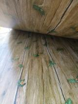 Plywood Panels  - 4x8' melamine paper faced plywood with eucalyptus core used for furniture usage