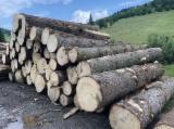 Evidencije Trupaca Za Prodaju - Drvenih Trupaca Na Fordaq - Za Rezanje, Jela