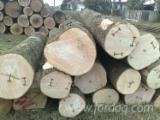 Hardwood  Logs Demands - Need White Ash Logs 70+ cm