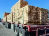 Hardwood  Sawn Timber - Lumber - Planed Timber Demands - Buying Tilia Squares, 15 mm