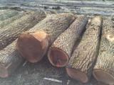 Forest And Logs - Black Walnut Saw, 12 cm