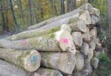 Bosques Y Troncos Asia - Compra de Troncos Para Aserrar Fresno Blanco PEFC Vietnam Or France/Belgium