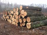 Loofhout  Stammen Eisen - Zaagstammen, Eik