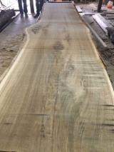 俄国 - Fordaq 在线 市場 - 木板, 橡木