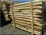 Forest and Logs - Robinia/Acacia Debarked pole