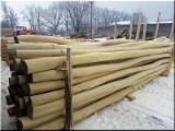 Hungary Hardwood Logs - Poles Acacia with diameter 6- 240 mm