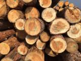 Siberian Pine Softwood Logs - Pine/Spruce Logs