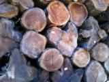 Forest And Logs South America - Teak Round Logs Certified