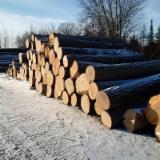 Păduri Şi Buşteni America De Nord - Vand Bustean De Gater Stejar Roșu
