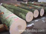 Loofhout  Stammen Eisen - Zaagstammen, Beuken