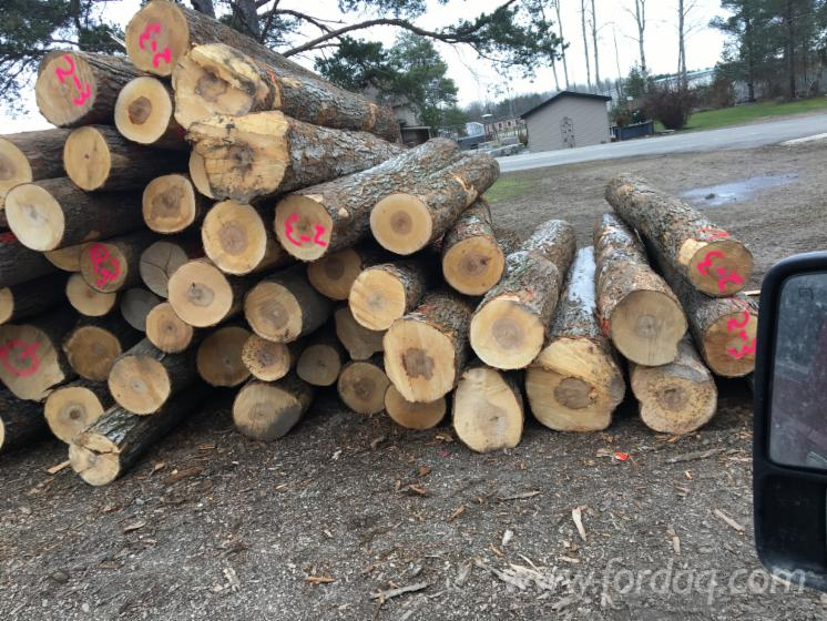 Hard-Maple-Saw-Logs-with-10-in