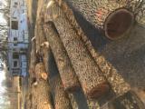 Canadá - Fordaq Online mercado - Venta Trozos Descortezados Nogal Negro Canadá Missouri