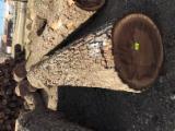 Vend Grumes De Tranche Noyer Noir, Chêne Blanc Illinois