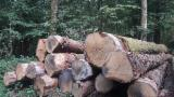 France - Fordaq Online market - PEFC/FFC 30 + cm Oak Saw Logs from France, Bourgogne