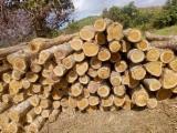 Standing Timber - Madera Teca en patio lista para ser transportada