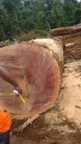 森林及原木 亚洲 - 锯木, 莱特来昂堇(菜)木