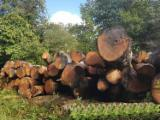PEFC American Red Oak Logs, 30-39 cm Diameter