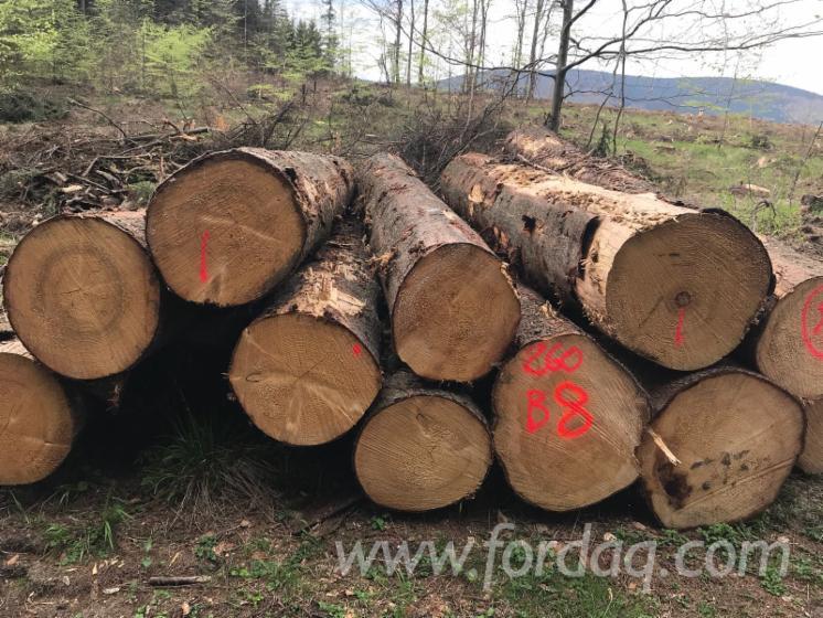 Vender Troncos Serrados Abeto - Whitewood Polônia