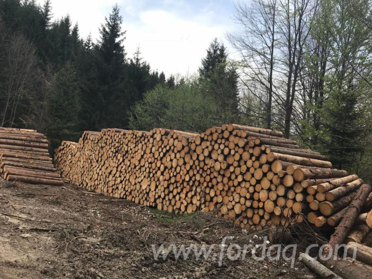 Troncos de madeira macia